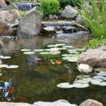 Brandywine Valley Water Garden Weekend Tour in Chester County