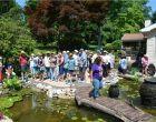 Water Garden Tour 2016