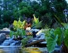 Water Garden Tour 2014